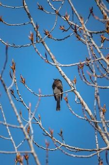 Brauner vogel auf braunem ast während des tages