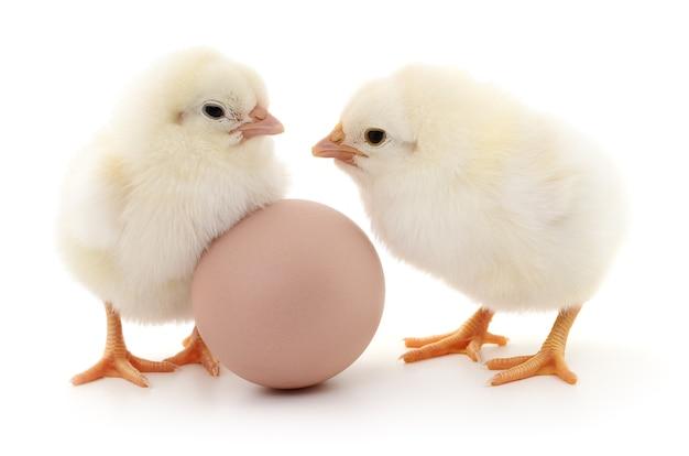 Braunes ei und zwei hühner isoliert