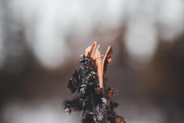 Braunes getrocknetes blatt in tilt-shift-linse