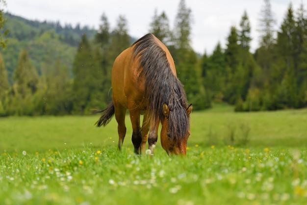 Braunes pferd auf der weide im frühling