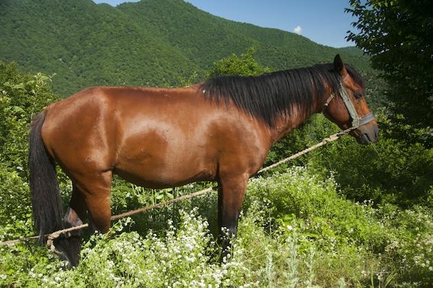 Braunes pferd auf der wiese, die tagsüber auf gras steht.