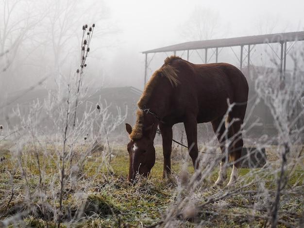 Braunes pferd auf der wiese im nebel