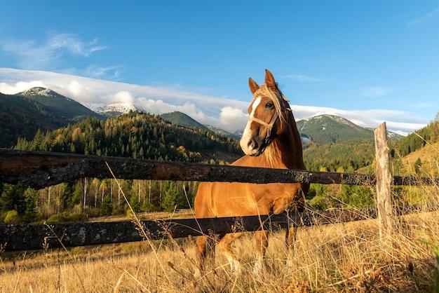 Braunes pferd auf einer weide auf einem hintergrund der berge am morgen