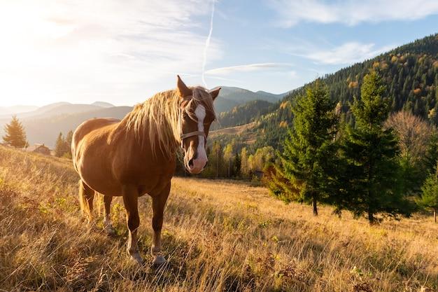 Braunes pferd auf einer weide über bergen am morgen mountains