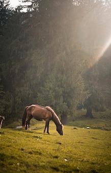 Braunes pferd, das an einem sonnigen tag auf einem feld weidet