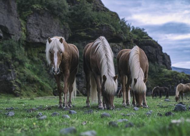 Braunes pferd, das gras auf grünem grasfeld während des tages isst