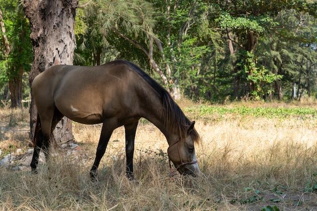 Braunes pferd, das gras isst