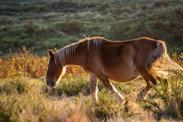 Braunes pferd, das in einem leeren feld mit grün auf dem hintergrund läuft