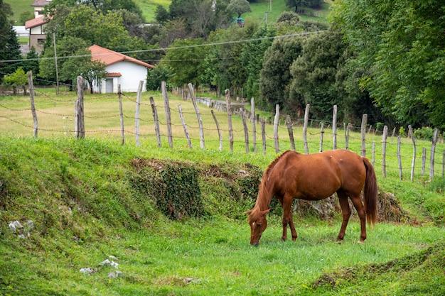 Braunes pferd in einem dorf. weidet und wedelt mit dem schwanz auf einer farmweide, die von einem zaun und bäumen umgeben ist