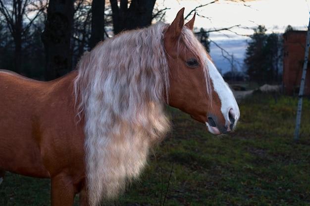 Braunes pferd und wald im hintergrund. hauspferd auf grünem hintergrund