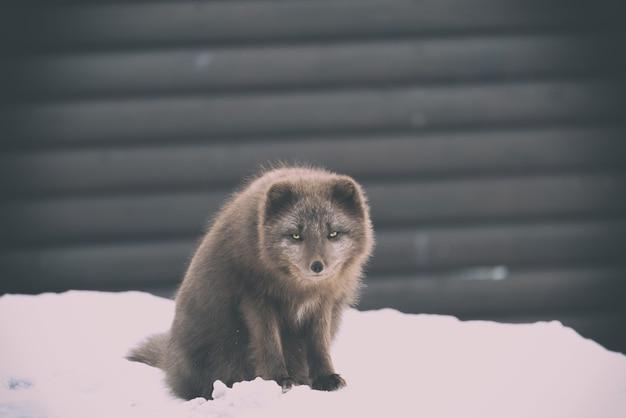 Braunes tier auf dem schnee während der tagesfotografie
