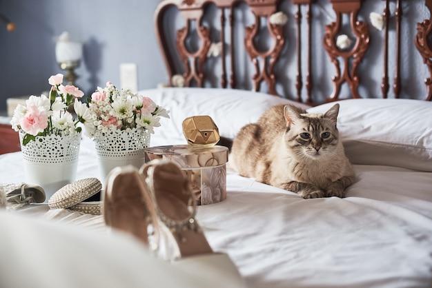 Brautschuhe, parfüm, blumen, schmuck und katze der stilvollen weißen hochzeit auf einem bett.