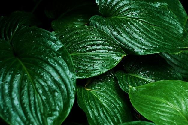 Breite grüne blätter mit wassertropfen