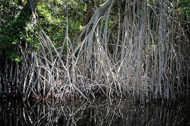 Breiter fluss in der nähe von black river in jamaika, exotische landschaft in mangroven