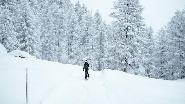 Breiter schuss einer person, die einen regenschirm hält, der einen schwarzen hund in der nähe von schneebedeckten bäumen geht