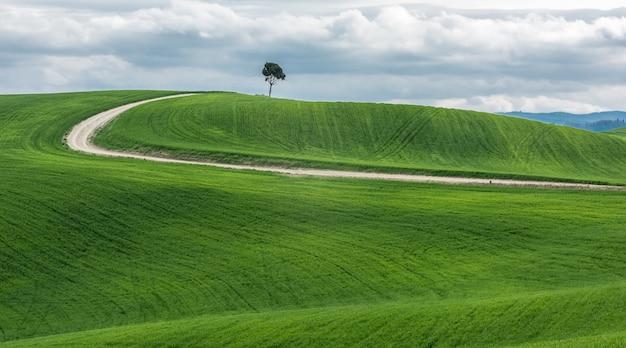 Breiter schuss eines isolierten grünen baumes nahe einem weg in einem schönen grünen feld