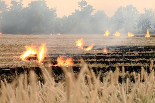 Brennen sie trockenes stroh auf dem gebiet auf der seite der straße in thailand