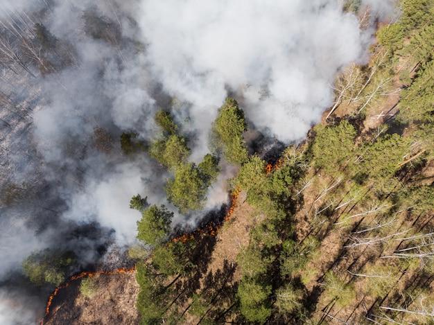 Brennender kiefernwald mit rauch und flammen