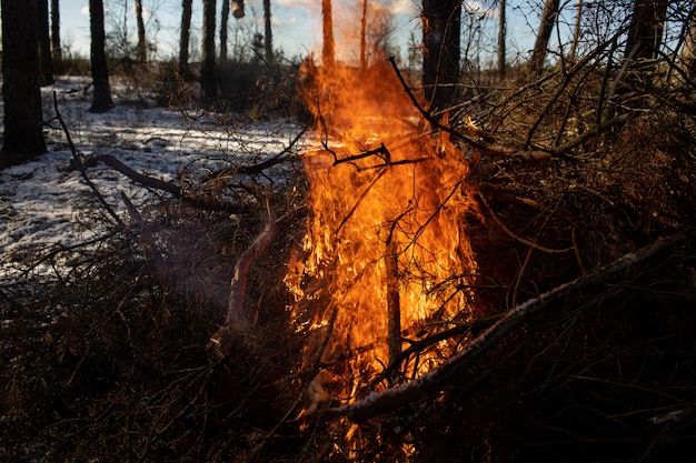 Brennendes feuer. das lagerfeuer brennt im wald. textur des brennenden feuers. lagerfeuer zum kochen im wald. trockene äste brennen. touristenfeuer im wald. textur brennender zweige