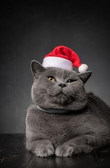 Britische katze in einer weihnachtsmannmütze