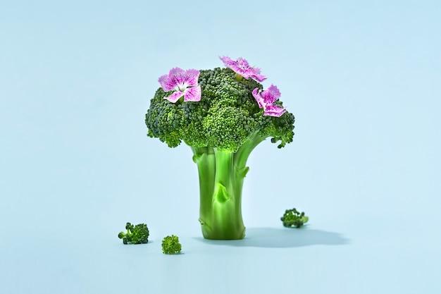 Brokkoli-zweig auf farbigem hintergrund, spargelkohl isoliert