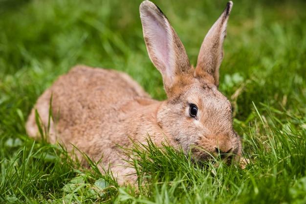 Brown-kaninchen auf grünem gras im park
