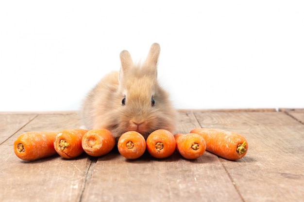 Brown-kaninchen, das karotte auf holztischhintergrund isst