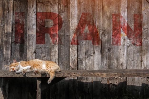 Brown-katze, die auf einer bank im iran schläft. inschrift iran