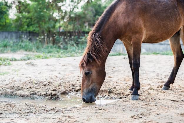 Brown-pferdetrinkwasser von den pfützen