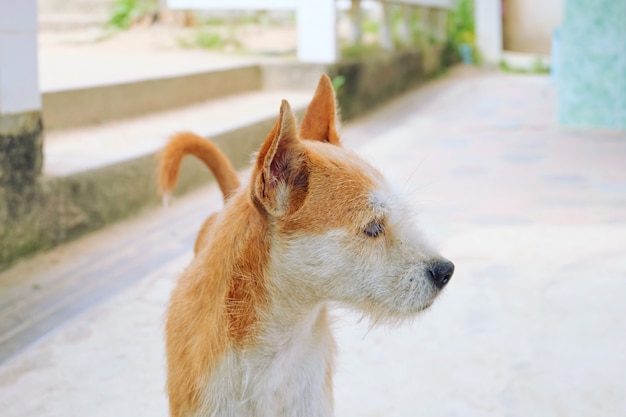 Brown und weißer hund, die auf dem boden stehen