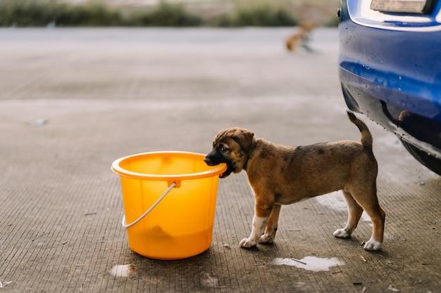 Brown-welpe beißt den behälter der waschanlage