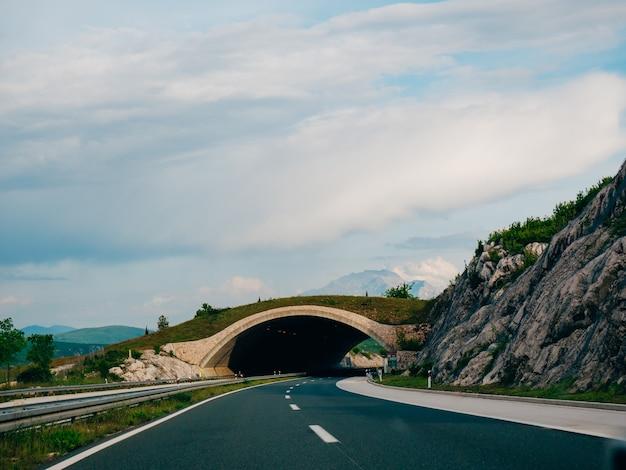 Brücke für tiere auf der straße grüne brücke über die straße Premium Fotos