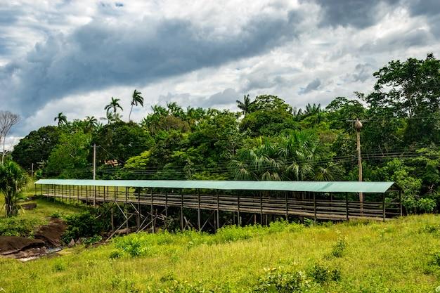 Brücke im amazonasgebiet heimisch