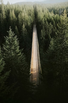 Brücke über einen fluss in einem wald