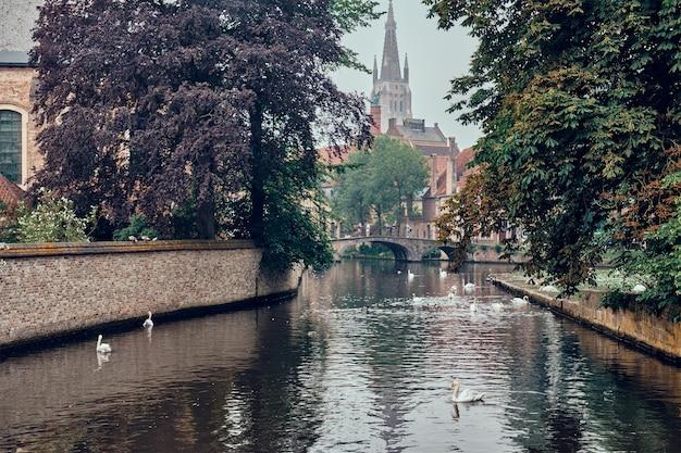 Brügge-kanal mit weißen schwänen zwischen alten bäumen mit kirche unserer lieben frau im hintergrund brügge bel...