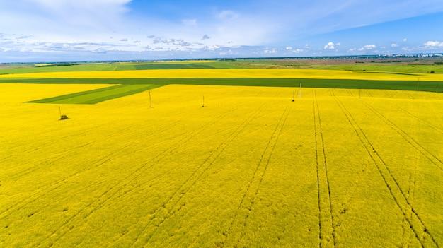 Brummenviererkabel hubschrauber auf gelbem maisfeld