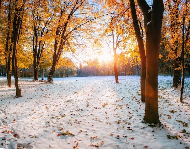 Buchenwald mit erstem winterschnee