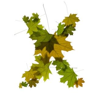 Buchstabe x aus grünen ahornblättern
