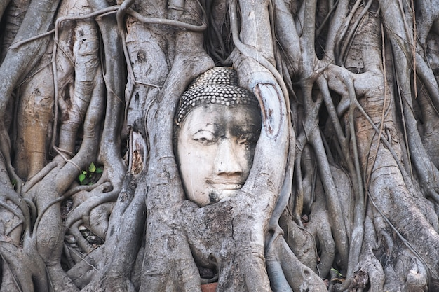 Buddha-bild in einer bodhi-baumwurzel