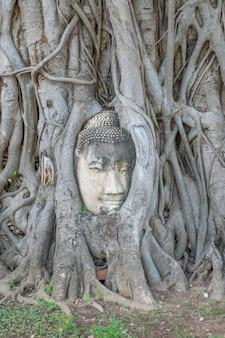 Buddha-kopf in den baumwurzeln am wat mahathat der geschichte von ayutthaya thailand.