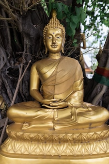 Buddha-statue unter dem baum