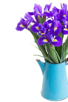 Bündel der blauen frischen iris im blauen topf nah oben lokalisiert auf weiß