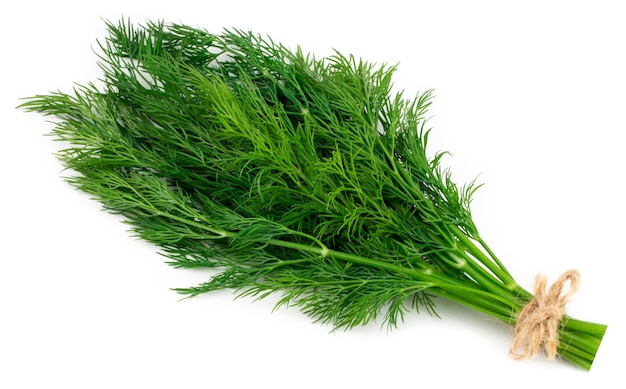 Bündel frischen grünen dill lokalisiert auf weißem hintergrund.