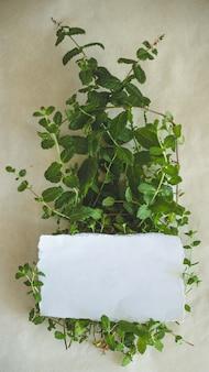 Bündel frisches grünes organisches minzblatt auf kraftpapier-nahaufnahme