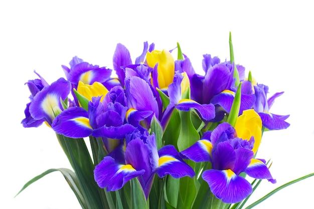 Bündel frühlingsgelbe tulpen und blaue iris schließen auf weiß lokalisiert