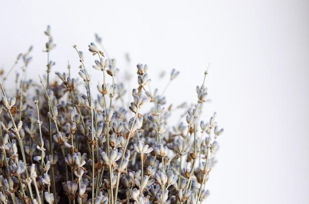 Bündel getrockneter lavendel nah oben bild