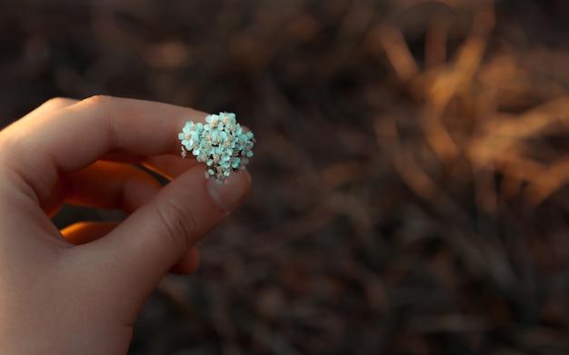 Bündel kleine gänseblümchen in der hand auf grünem natürlichem