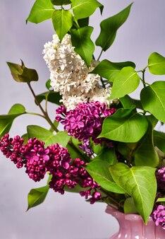 Bündel lila blumen mit hellem lavandahintergrund.