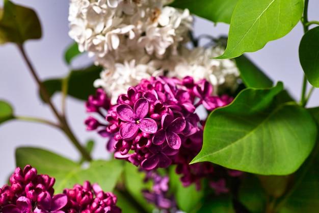 Bündel lila blumen. wunderschöne frühlingsblumen