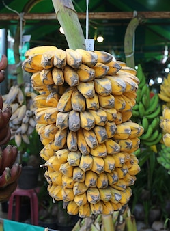 Bündel reife angebaute bananen